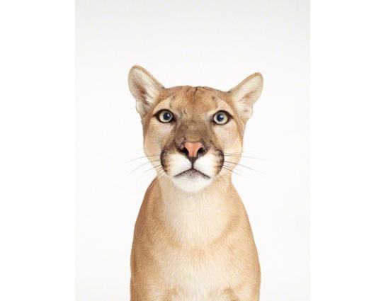 sharon-montrose-animal-photography-print