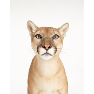 sharon-montrose-animal-photography-print