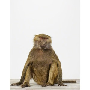 sharon-montrose-animal-photpgraphy