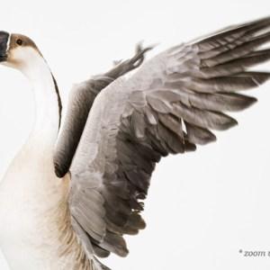 sharon-montrose-birds-photography-1.php