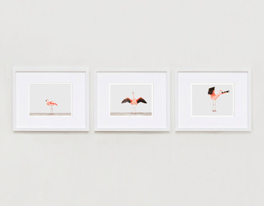 sharon-montrose-flamingo-bird-ar-4.php