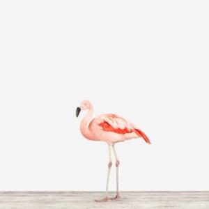 sharon-montrose-flamingo-bird-art-1.php