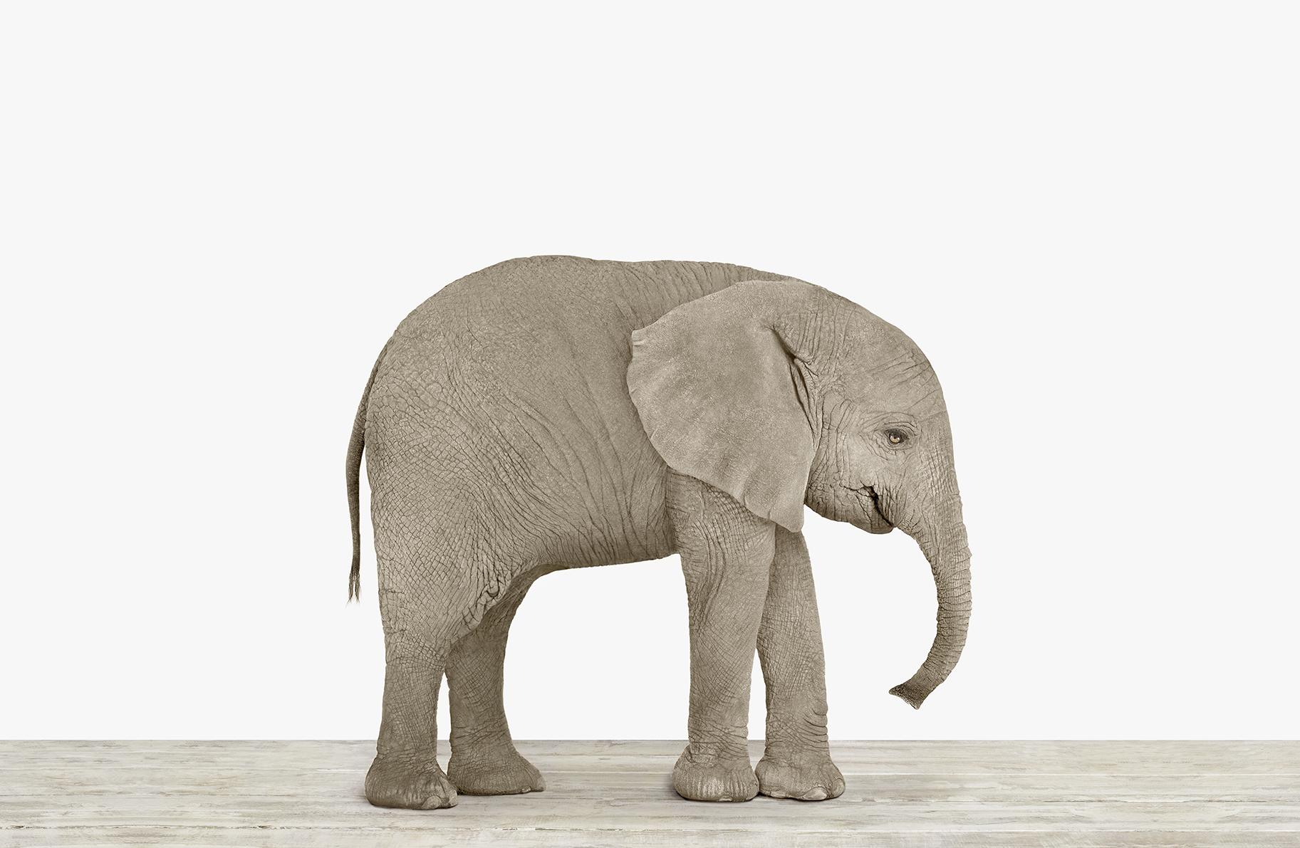 - The Animal Print Shop — Sharon Montrose Online Animal Art Gallery