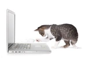 Kitten with laptop