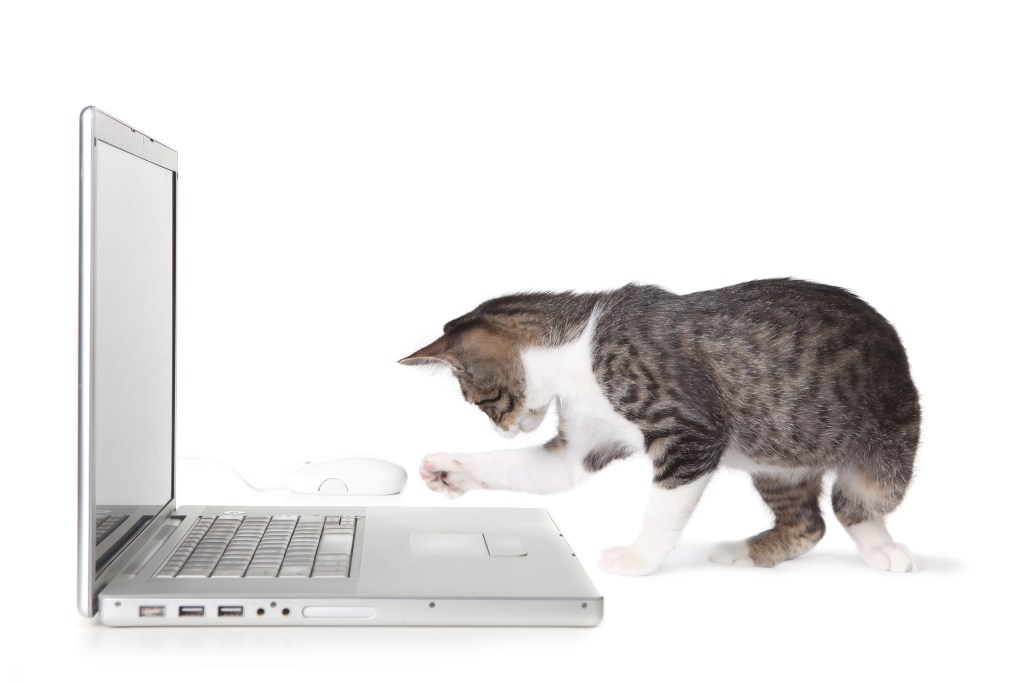 Kitten with laptop