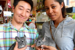 Chinchilla Owners