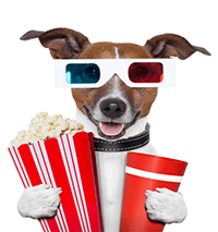 Video dog