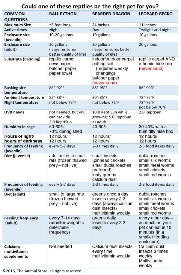 small-reptile-comparison-chart