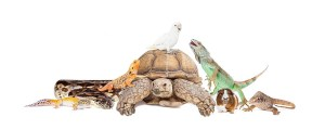 The Animal Store Pets header