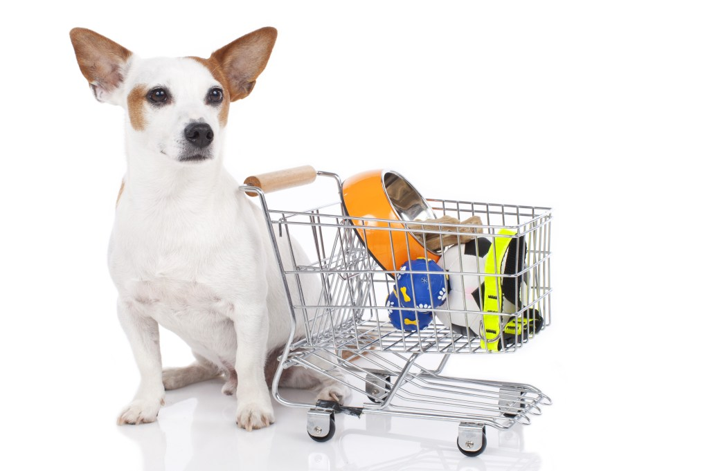 Dogs with supplies