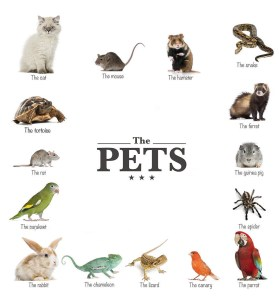 The pets poster