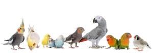 The Animal Store Baby Bird Variety