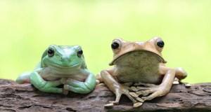 The Animal Store Amphibians
