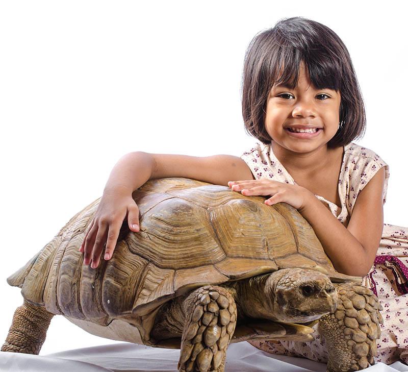 Sulcata Tortoise The Animal Store turtles and tortoises