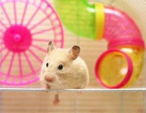 Hamster habitat pocket pets