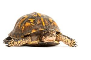 Animal Store Reptile Sale Box Turtle