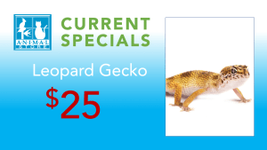 The Animal Store Leopard Gecko