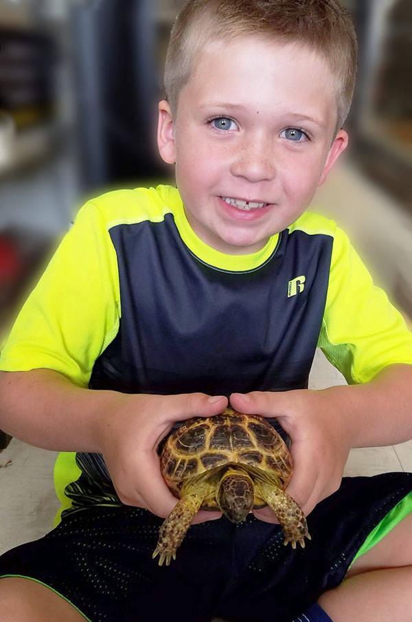 The Animal Store Russian Tortoise
