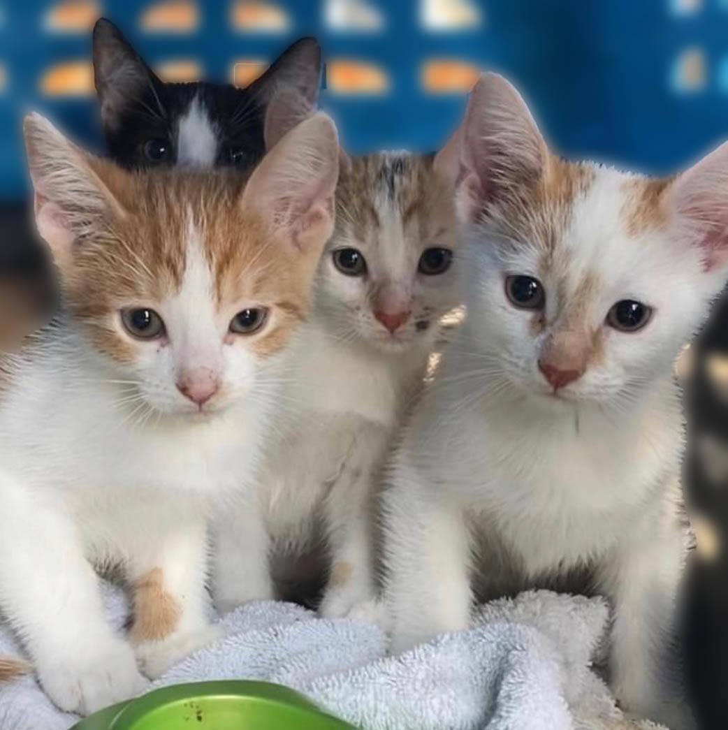 The Animal Store kitten
