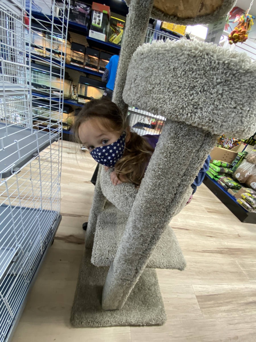 Visit The Animal Store: Vika and the cat tree