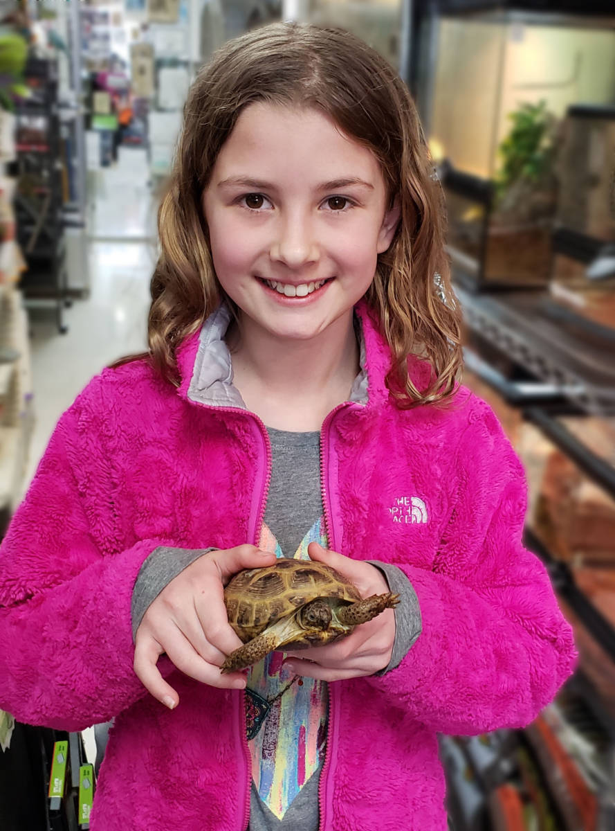 The Animal Store Izzy and Russian Tortoise