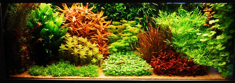 20 Gallon Aquarium Aquascape Ideas