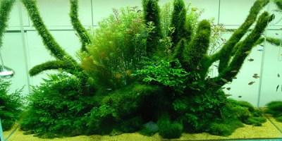 Understanding Nature Aquascaping Style | The Aquarium Guide