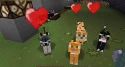 Minecraft Tame An Ocelot