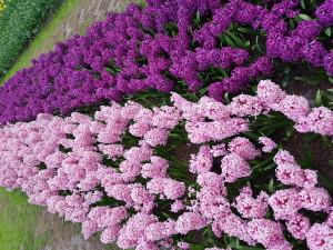 פרחים סגולים באמנות | ארט בלוג אומנות
