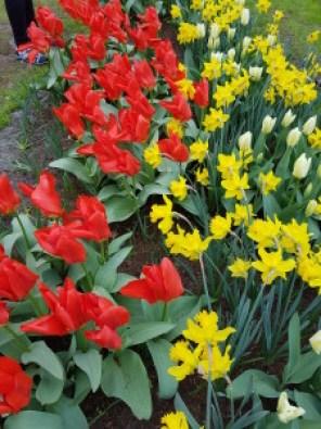 יצירת צבעים מפרחים
