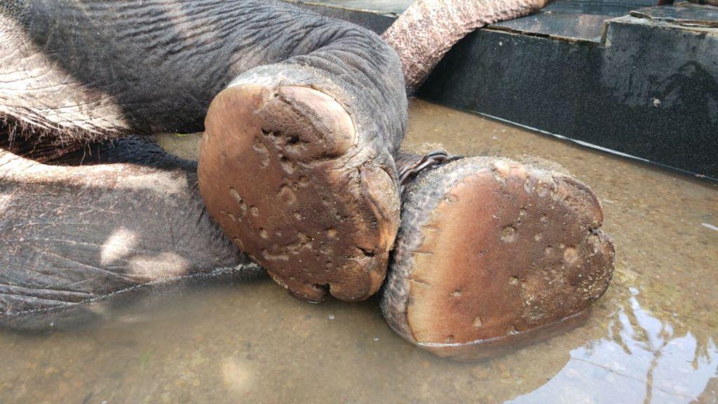 טיפול מסור בפילים Careful care of animals