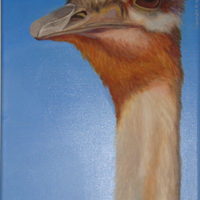 A Head Above: Ostrich (60x30cm, 24x12in) Oil on Canvas
