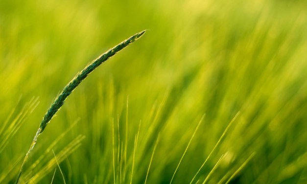 Psalm 90:1–6: Reflections on Dust and Grass