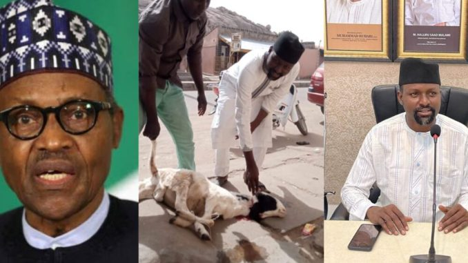 Man throws a ram party in Katsina state to celebrate President Buhari's return from his medical trip in the UK