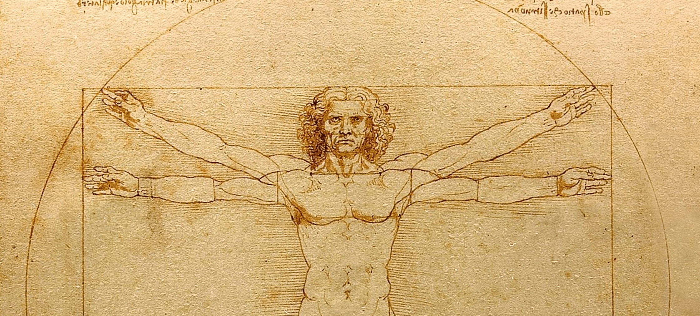 Leonardo D Exhibition : The arts shelf u2013 leonardo da vincis vitruvian man to be unveiled