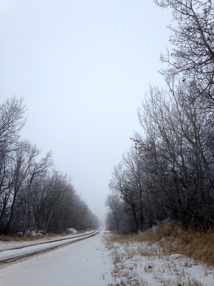 the artyologist- image of ethereal winter beauty of country road and tree branches