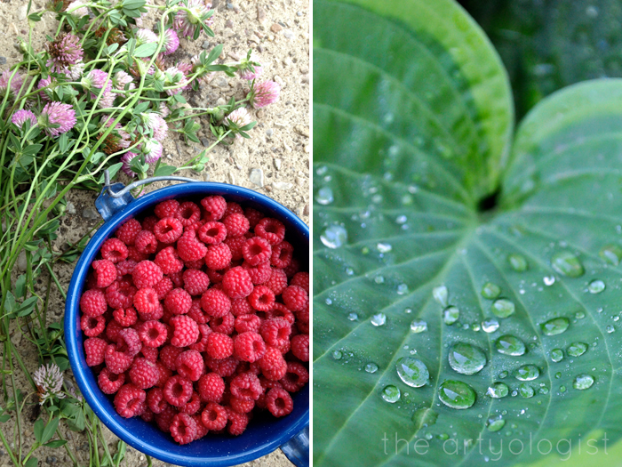 Life Lately: In Photos, The Artyologist - Berry Picking and Hosta Leaf
