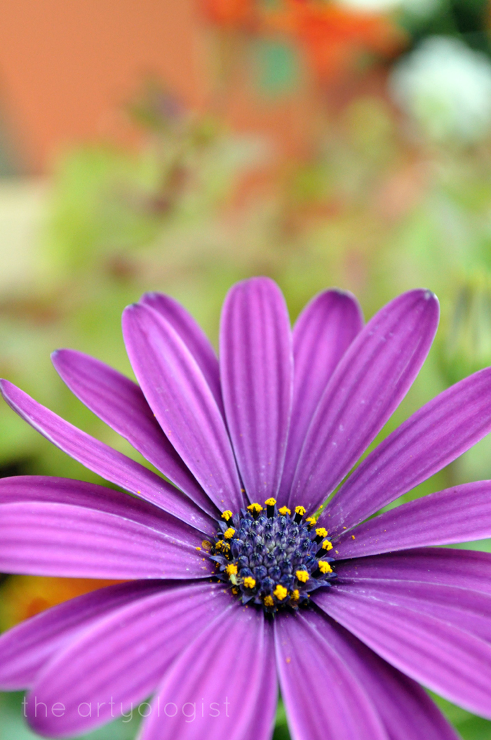 purple daisy, technicolor flowers, the artyologist