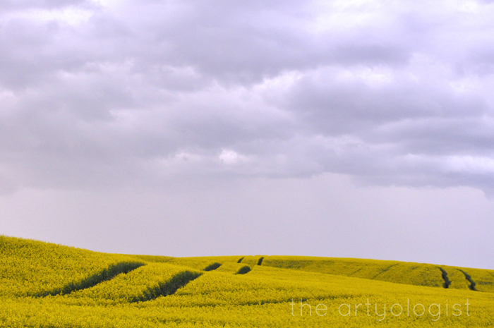 """Ready for Poiret's Thousand and Second Night"""" The Artyologist Canola Field"""