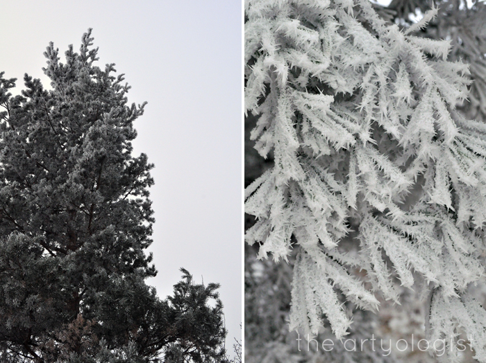 rime frost on-pine, the artyologist