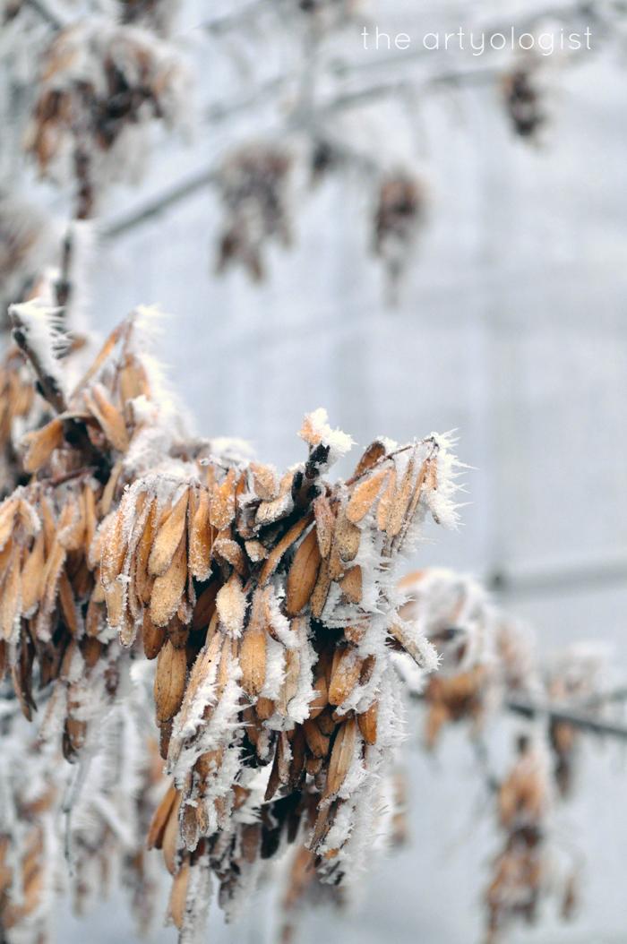 keys, rime frost, the artyologist