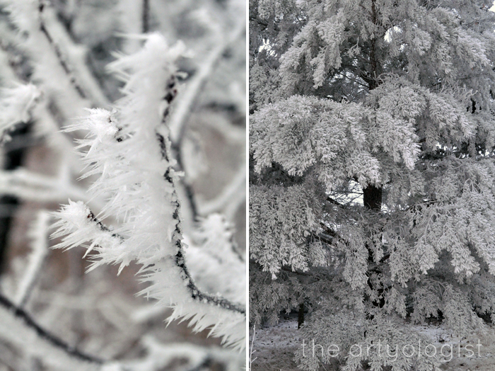 rime frost on branch and pine tree, edge of winter, the artyologist