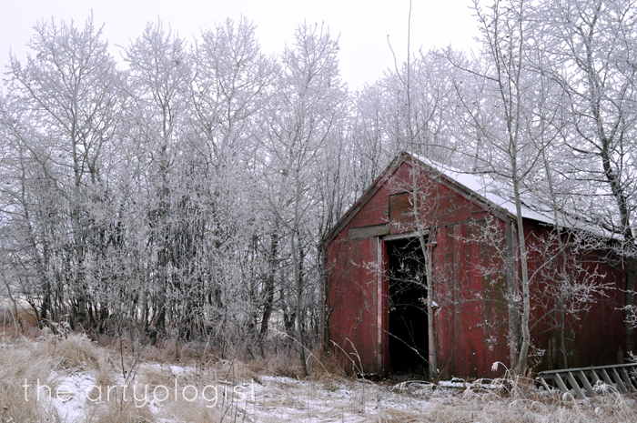 red-shed, rime frost, the artyologist