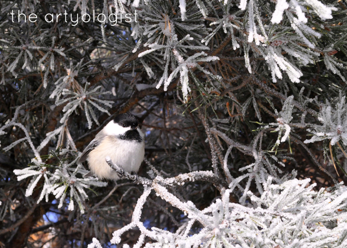 Here Comes The Sun, the artyologist, chickadee friend