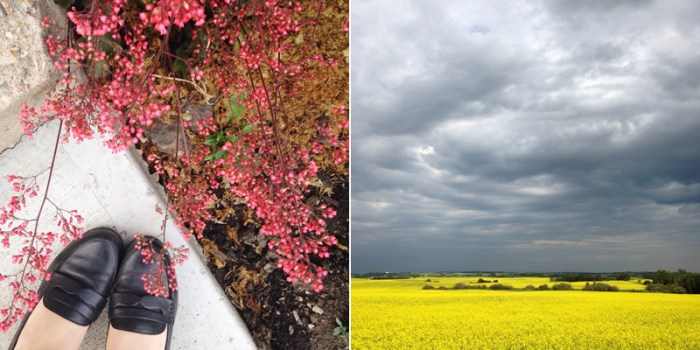 shoes coral bells and canola field