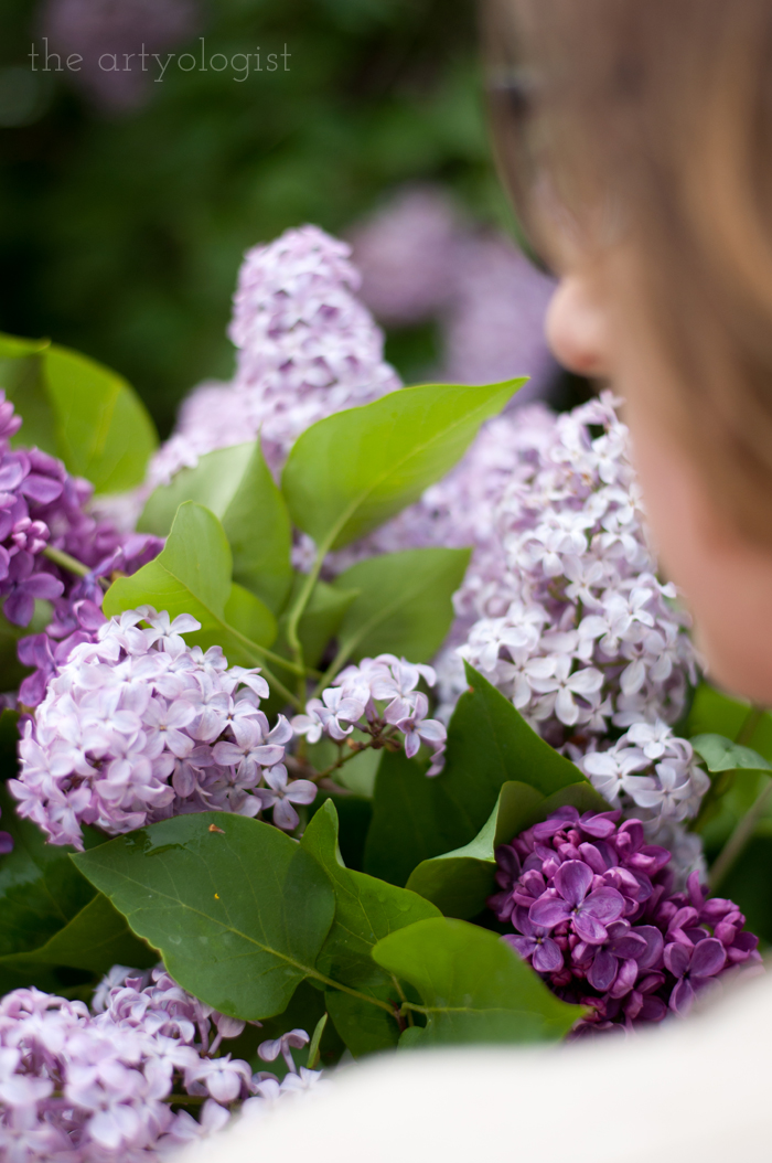 Lilacs, A Gingham Dress and The Second Post That Almost Wasn't, smelling the flowers