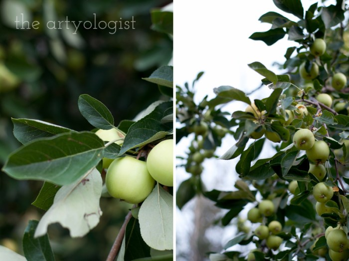 Photo Journal: Fall Time at the Farm, the artyologist, apple-branches