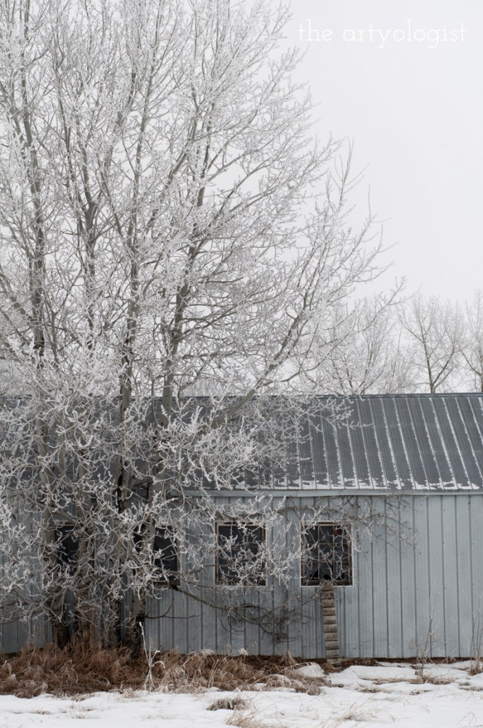 winters-day-chicken-shed, the artyologist