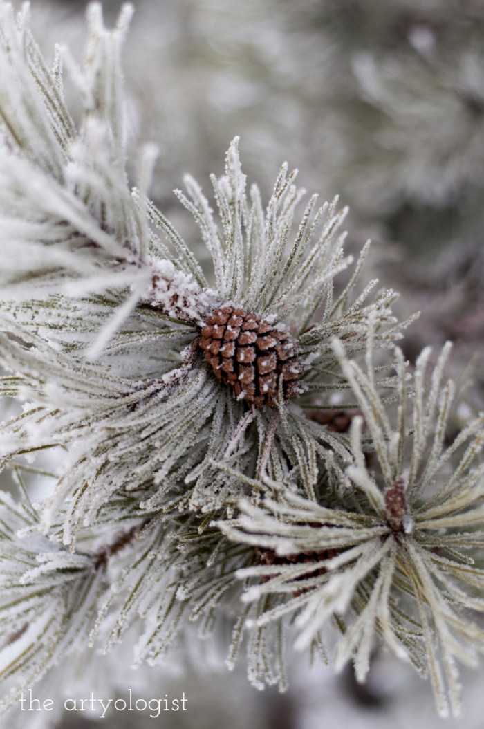 winters-day-pinecone, the artyologist