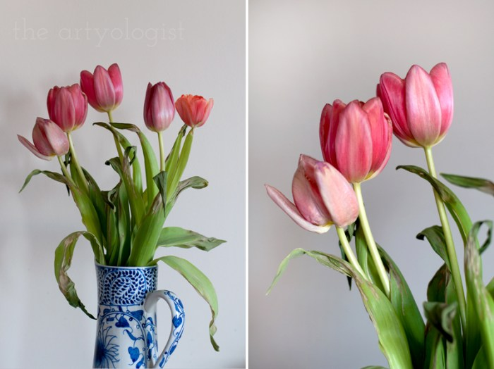 tulip-study, the artyologist